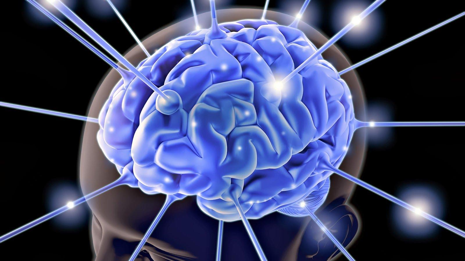 células cerebrais